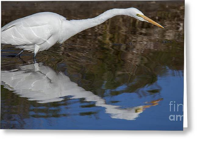 Great Egret Greeting Card by Twenty Two North Photography