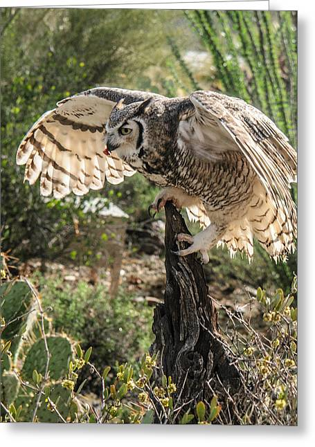 Great Horned Owl Greeting Card by Tam Ryan