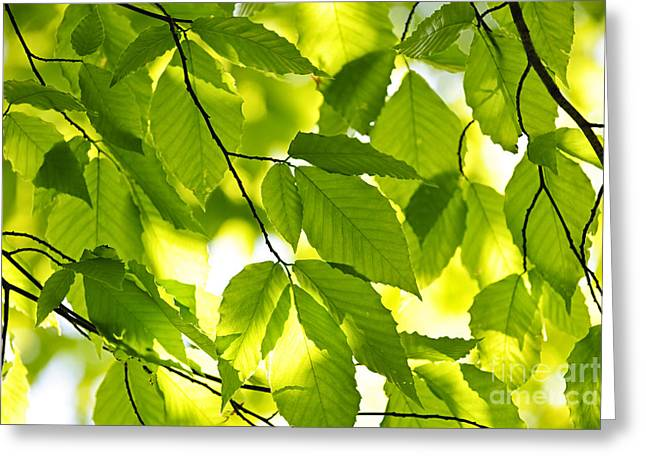 Green Spring Leaves Greeting Card