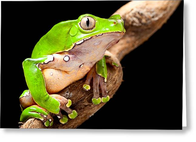 Green Tree Frog Amazon Rain Forest Greeting Card