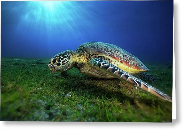 Green Turtle Greeting Card by Barathieu Gabriel