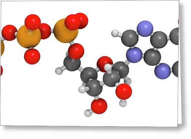 Guanosine Triphosphate Molecule Greeting Card by Molekuul