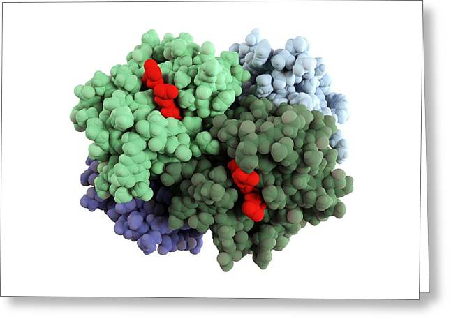 Haemoglobin Molecule Greeting Card