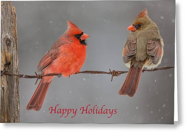 Happy Holidays Cardinals Greeting Card