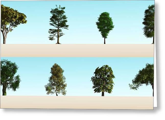 Hardwood Trees Greeting Card
