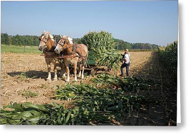 Harvest On An Amish Farm Greeting Card