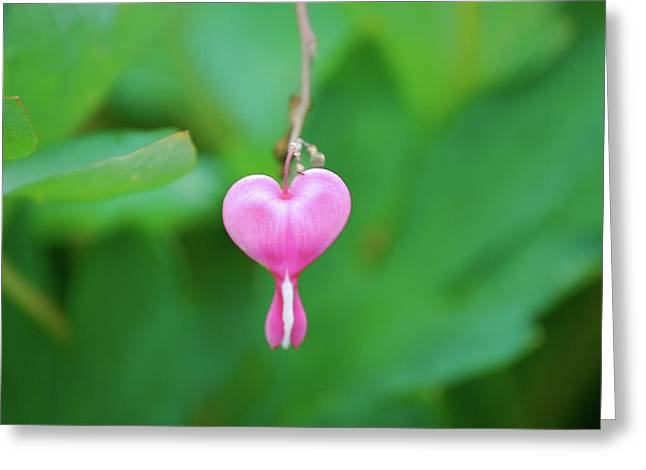 Heart On A Vine Greeting Card by Kathy Gibbons