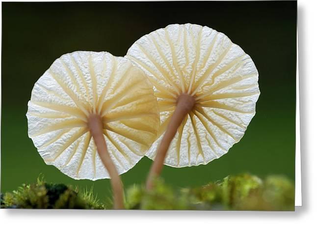 Heath Navel Fungus Greeting Card by Nigel Downer