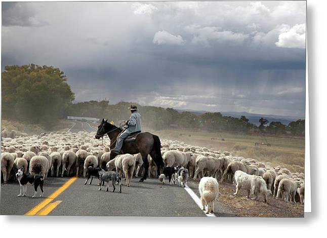 Herding Sheep Greeting Card by Jim West