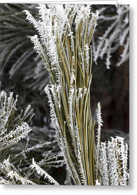Hoar Frost Greeting Card by Steven Ralser