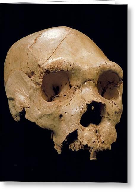 Homo Heidelbergensis Skull (cranium 5) Greeting Card