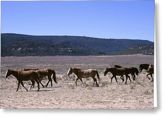 Horses Running In A Field, Colorado, Usa Greeting Card