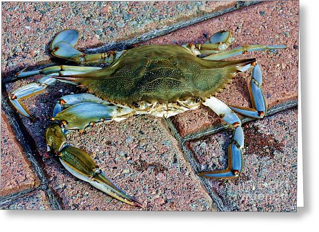 Greeting Card featuring the photograph Hudson River Crab by Lilliana Mendez