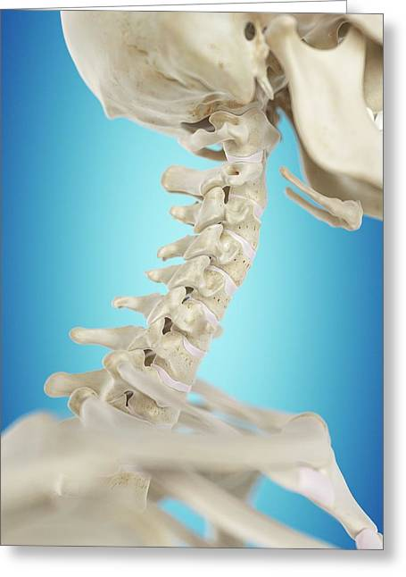 Human Cervical Spine Greeting Card by Sciepro