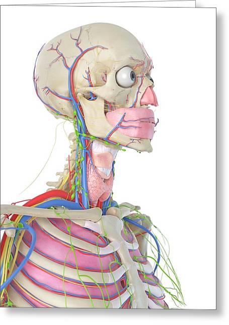 Human Head Greeting Card by Sciepro