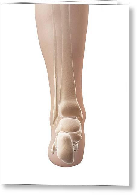Human Heel Bones Greeting Card