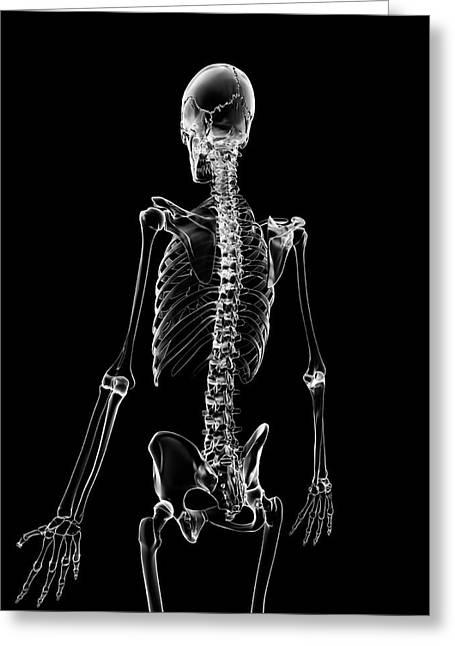 Human Skeleton Greeting Card