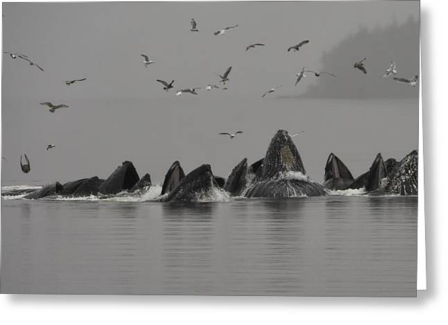 Humpbacks Feeding In The Mist Greeting Card by Lisa Hufnagel