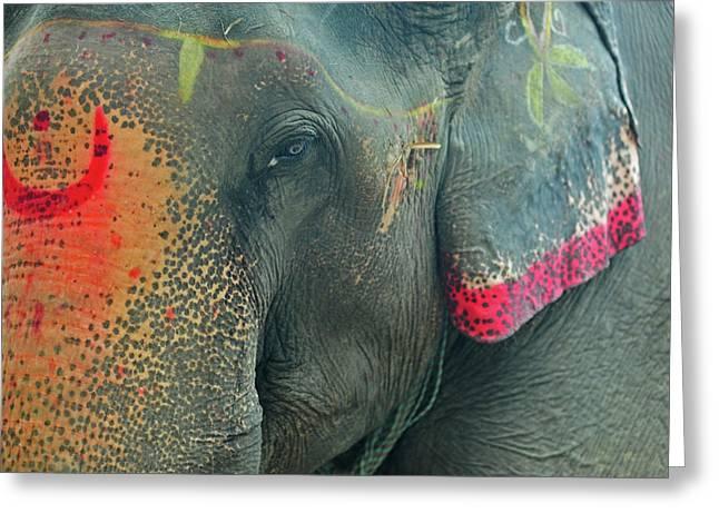 India, Bihar, Patna, Sonepur, Sonepur Greeting Card