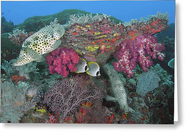 Indonesia, Papua, Raja Ampat, Se Misool Greeting Card by Jaynes Gallery