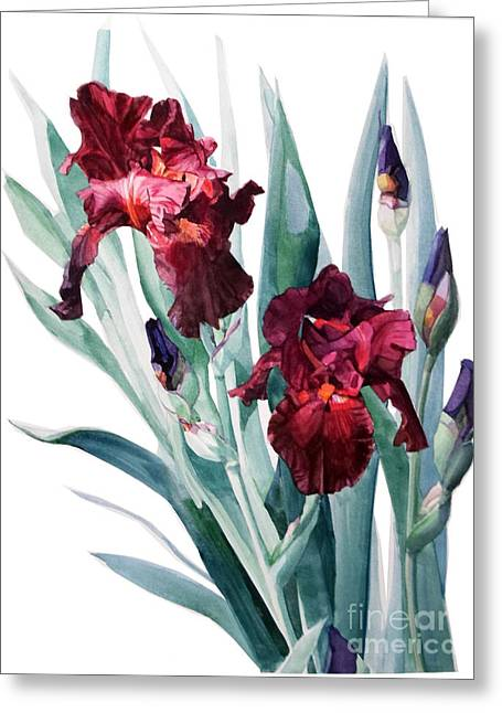 Dark Red Tall Bearded Iris Donatello Greeting Card