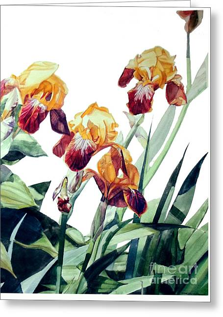 Watercolor Of Tall Bearded Irises I Call Iris La Vergine Degli Angeli Verdi Greeting Card