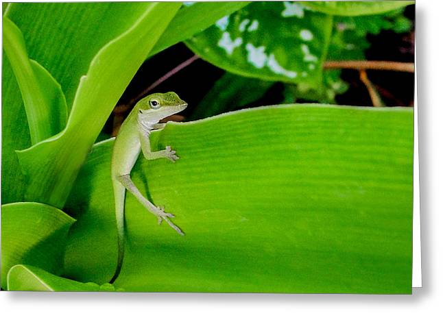 Greeting Card featuring the photograph It's Easy Being Green by TK Goforth