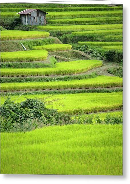 Japan, Nara Prefecture, Soni Plateau Greeting Card