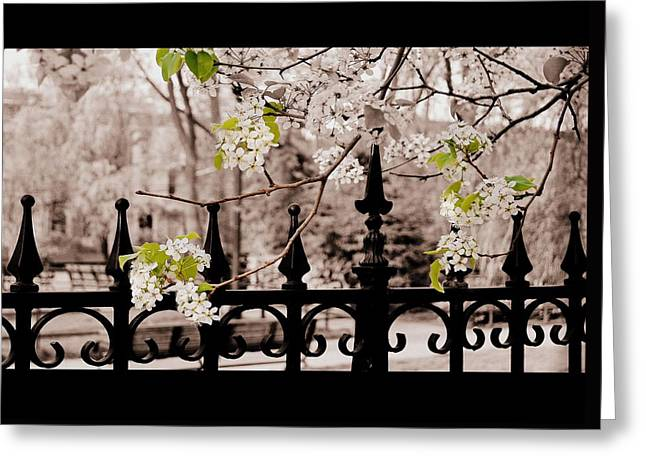 Joyce's Trees Greeting Card by JAMART Photography