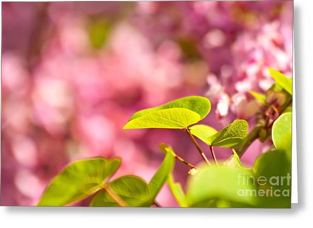 Judas Tree Flower And Leaves Greeting Card by Leyla Ismet
