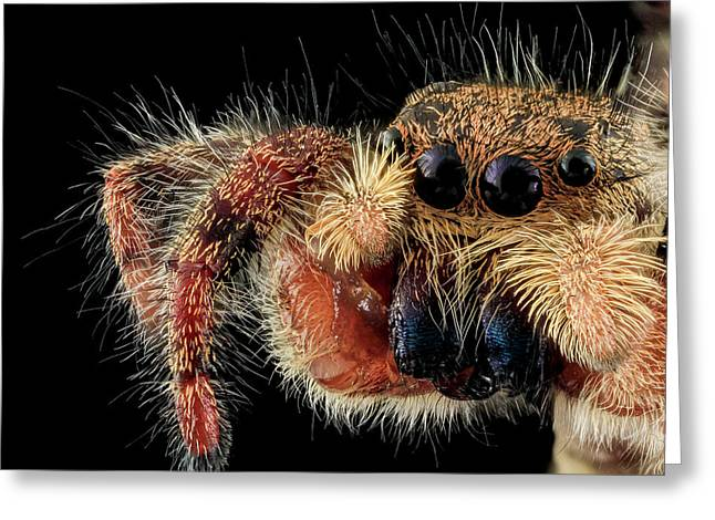 Jumping Spider Greeting Card by Us Geological Survey