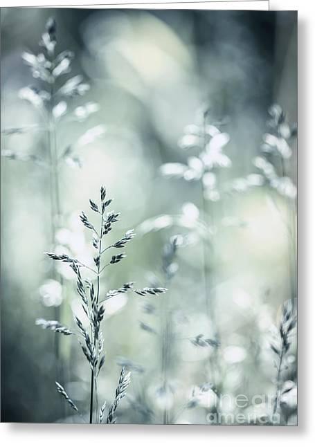 June Grass Flowering Greeting Card by Elena Elisseeva