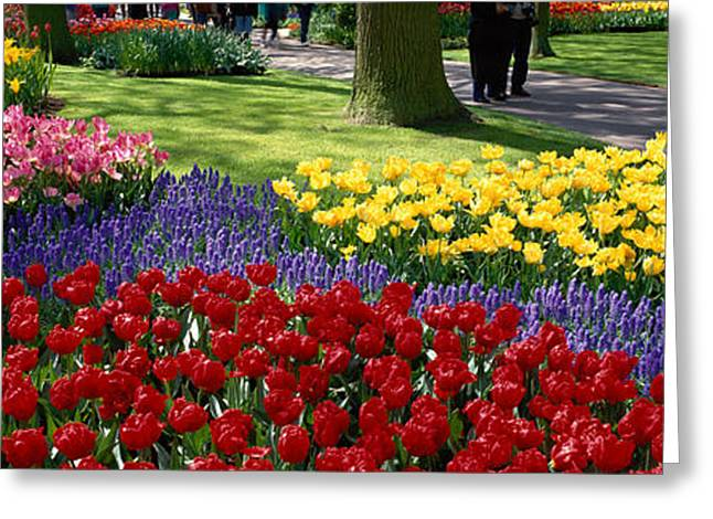 Keukenhof Garden, Lisse, The Netherlands Greeting Card by Panoramic Images