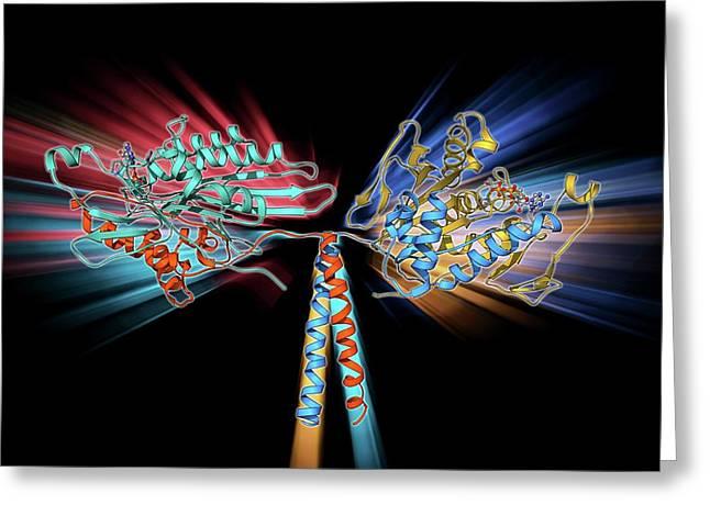 Kinesin Motor Protein Greeting Card by Laguna Design