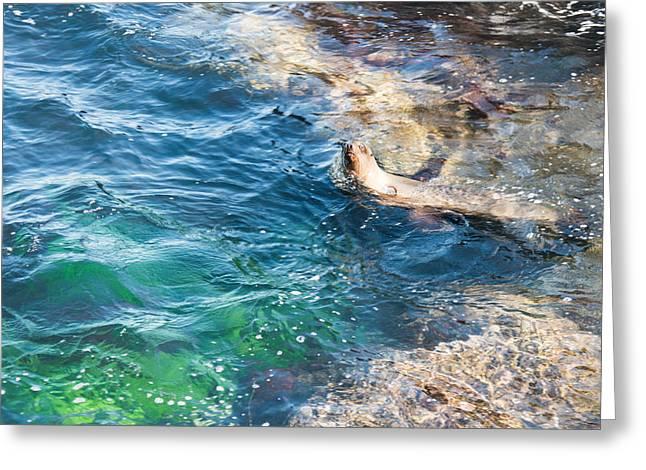 La Jolla Cove Series Greeting Card by Josh Whalen