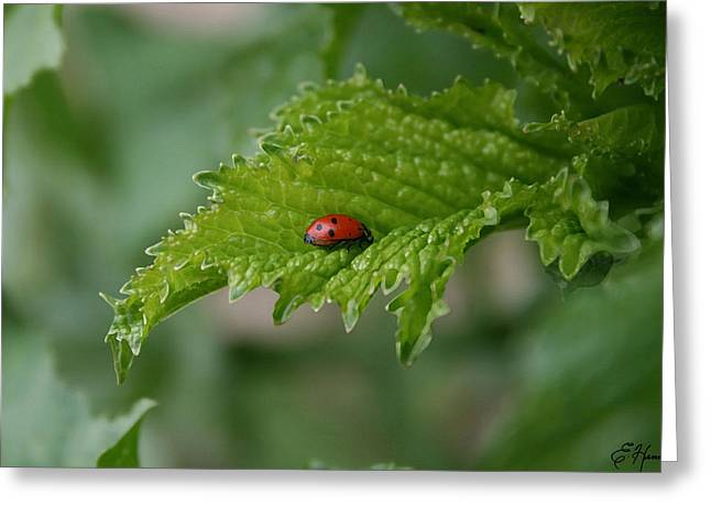 Ladybug Greeting Card by Ellen Henneke
