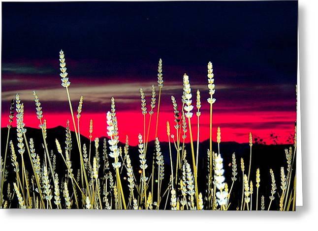 Lavender Sunset Greeting Card by Mavis Reid Nugent
