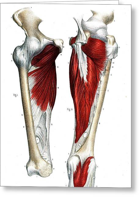 Leg Joints Greeting Card by Collection Abecasis