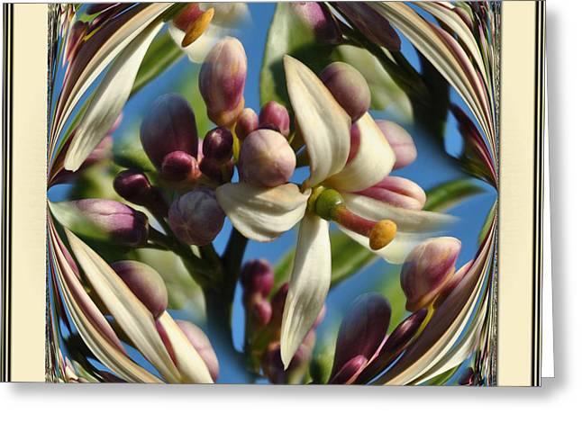 Lemon Tree Flower  Greeting Card