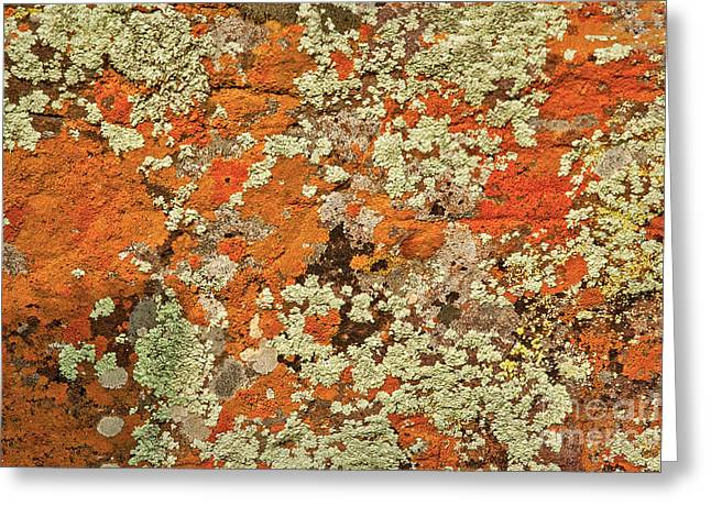 Greeting Card featuring the photograph Lichen Abstract by Mae Wertz