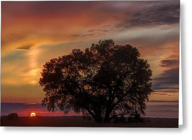 Light Pillar And Cottonwood Greeting Card