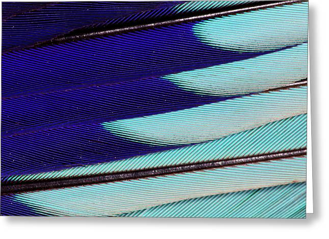 Lilac Breasted Roller Feathers Pattern Greeting Card