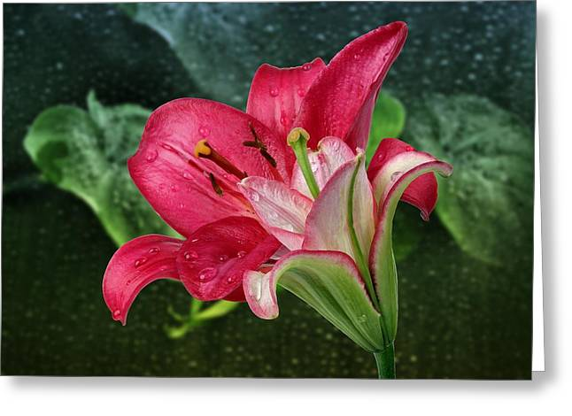 Lilies Greeting Card by Manfred Lutzius