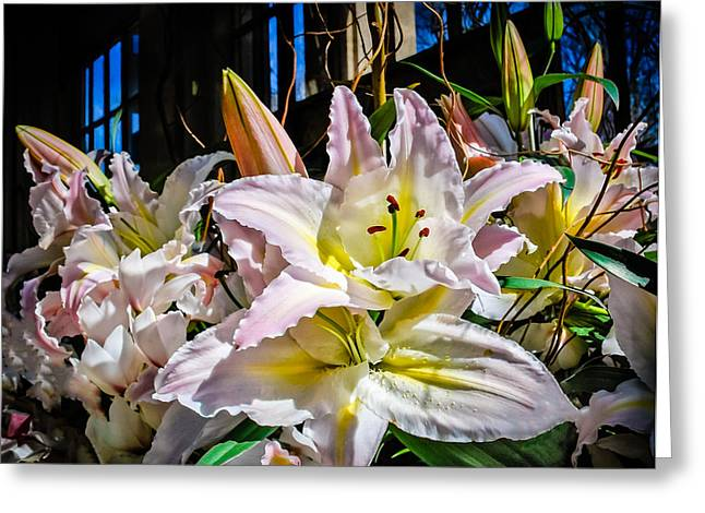 Lilies Out Of The Shadows Greeting Card