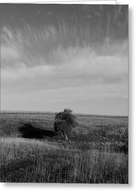 Lonely In The Field Greeting Card by Robert Geier
