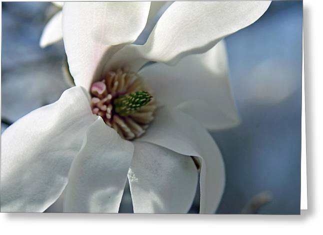 Magnolia In Watercolor Greeting Card by Carolyn Stagger Cokley