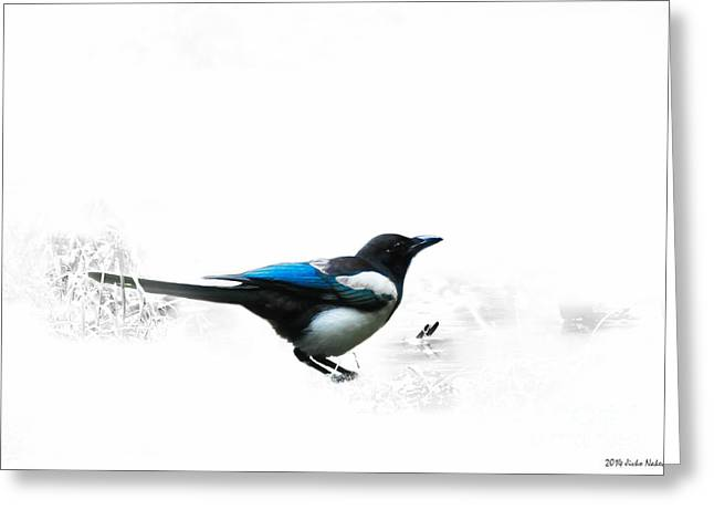 Magpie Greeting Card by Jivko Nakev