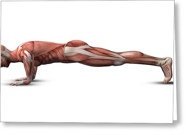 Male Muscle Structure, Artwork Greeting Card