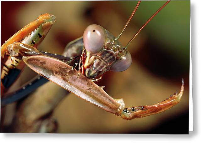 Mantis Greeting Card by Tomasz Litwin