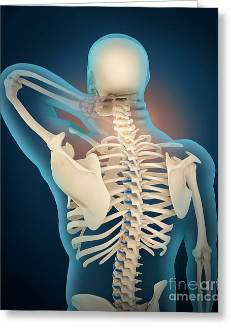 Medical Illustration Showing Greeting Card by Stocktrek Images